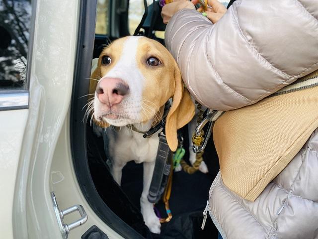 車でドライブに行く犬と飼い主
