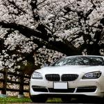 桜の木と白いセダン